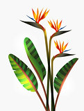 Bird of Paradise flower and stem