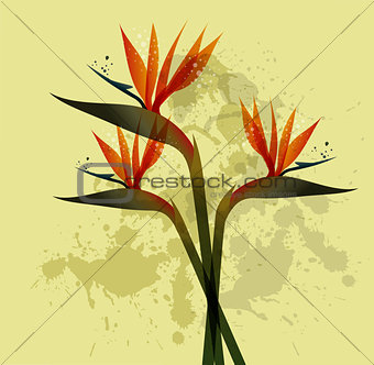 Bird of Paradise flower over grunge background