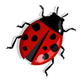Red ladybug isolated