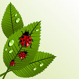 Spring leaves and beetle background