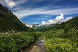 Mountain scenery, alpine meadows in summer