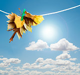Autumn leaves on a rope
