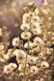 deflorate wild flower