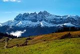 green alpine meadows