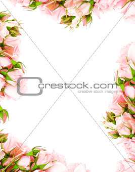 Fresh roses frame