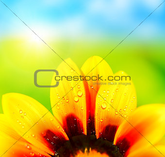 Abstract flower petals colorful background