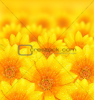Fresh yellow flower background