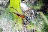 jumping spider on nest
