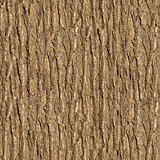 Elm Bark. Seamless Texture.