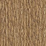 Elm Bark. Seamless Texture.