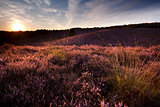 sunset on hill covered with heather