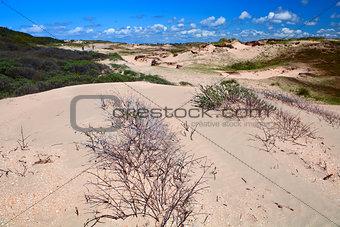 sand dunes bu Zandvoort aan Zee
