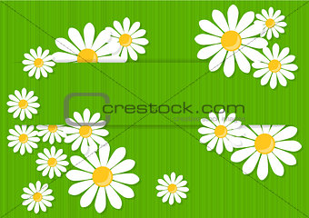 Greeting card with daisies