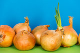 Onions and green shoots
