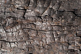 Burnt tree trunk Macro
