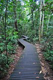 Zig-zag walkway in a forested area at Lower Peirce