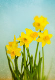 Vintage Yellow Daffodils