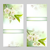 Set of spring banners with blossoming tree branch with white flowers.