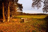 typical Dutch rural landscape