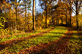 ground road in autumn forest