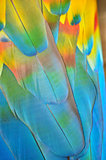 Macaw's bright feathers