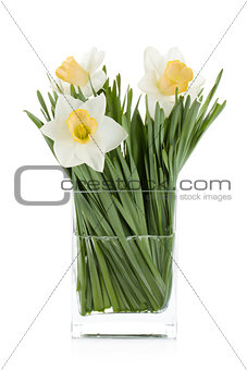 White daffodils