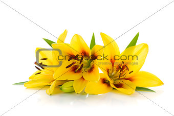 Three yellow lily