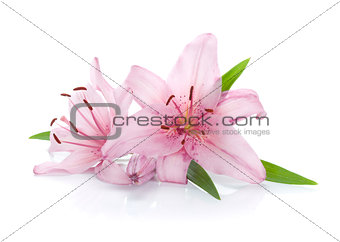 Two pink lily