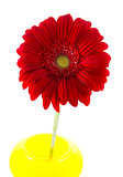 red gerbera in yellow vase