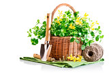 spring yellow flowers in basket with garden tools