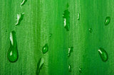 Green leaf background and drops