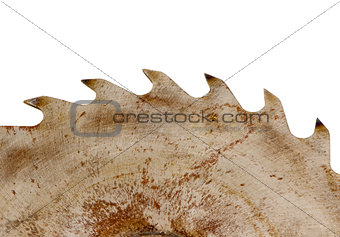 rusty circular saw disk teeth closeup on white