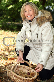 Mature woman picking chestnuts