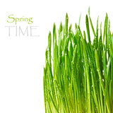 Spring time.