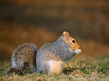 Reverent squirrel