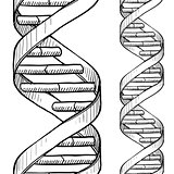 Seamless DNA double helix pattern