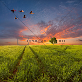 Evening landscape with a green field