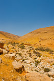 Israel Desert