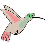 Hummingbird Cartoon Vector Illustration