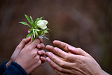 child&#39;s hand giving flowers to his father