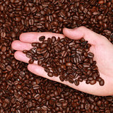 Hand with coffee beans