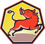 Wild Pig Razorback Hog