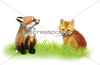 Fox cab