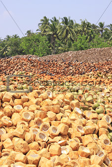 Pile of discarded coconut husks