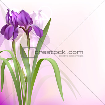 Purple Iris Flowers on bokeh background.