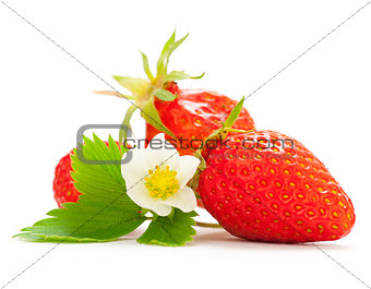 Strawberries With a White Flower and Green Leaves