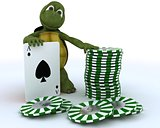 tortoise with casino cards and chips
