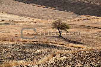 lonely tree on hills in Andalucia