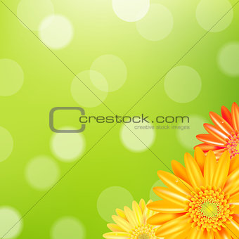 Green Nature Background With Yellow Gerbers