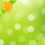 Green Nature Background With Yellow Gerbers And Green Ribbon